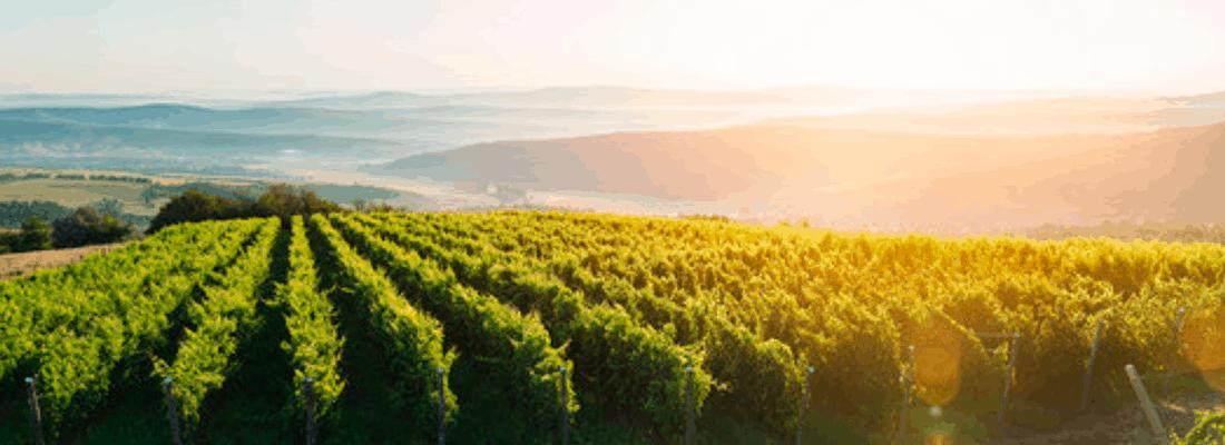 wine_flields_seperator